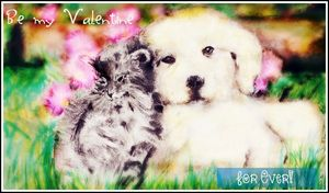 Of cats and dogs love
