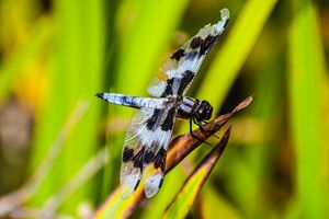 Perfectly imperfect dragonfly