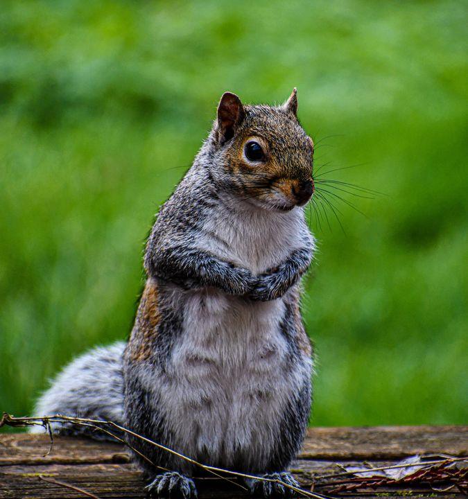 Cute Squirrel 🐿 - Kari Ann Jamison Photography
