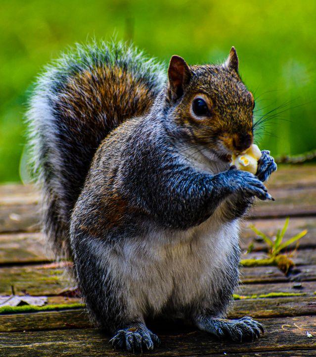 Squirrel got his snack - Kari Ann Jamison Photography