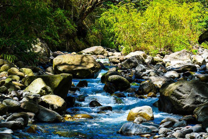 Tropical Rainforest - Kari Ann Jamison Photography