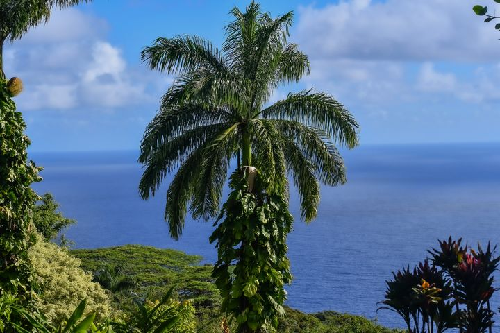 Tropical Trees - Kari Ann Jamison Photography