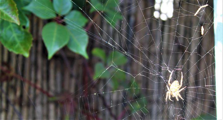 building the web... - billys art...