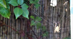 building the web...
