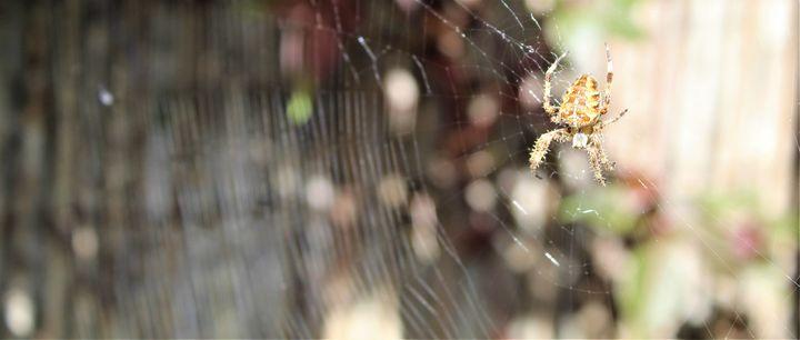 spider in a web... - billys art...