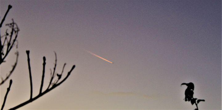 is it a bird, is it a plane ? - billys art...
