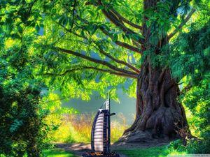 HD tree