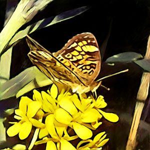 Feasting Yellow Butterfly