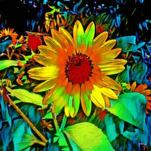 Brighter colourful sunflowers