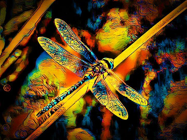 Rainbow Dragonfly - SAS Collection