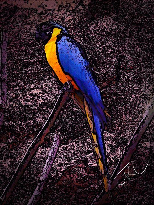 Tropical Song - JrcARTnPhotography