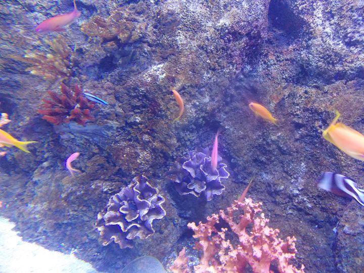 fishies - crafty jacks cave