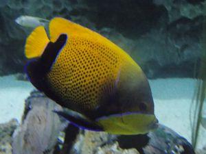 posing fish