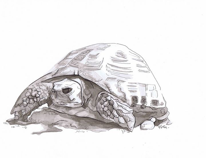 Desert Tortoise - Pullin Artwork