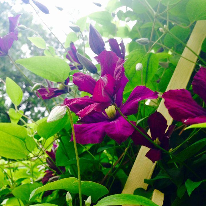 Purple Flower - Payton Massey