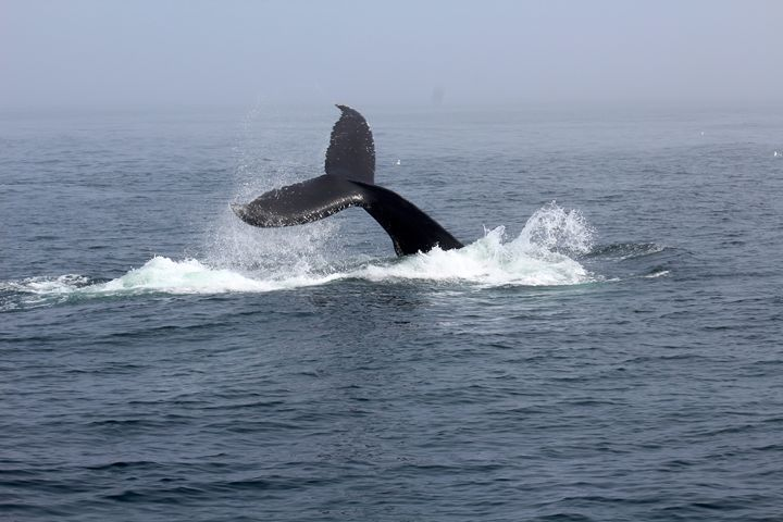 Whale Tail - iRok Photography