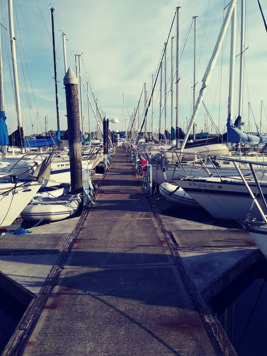 Marina and Sailboats Docked - The Beauty that Surrounds Us