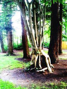 Unique Tree