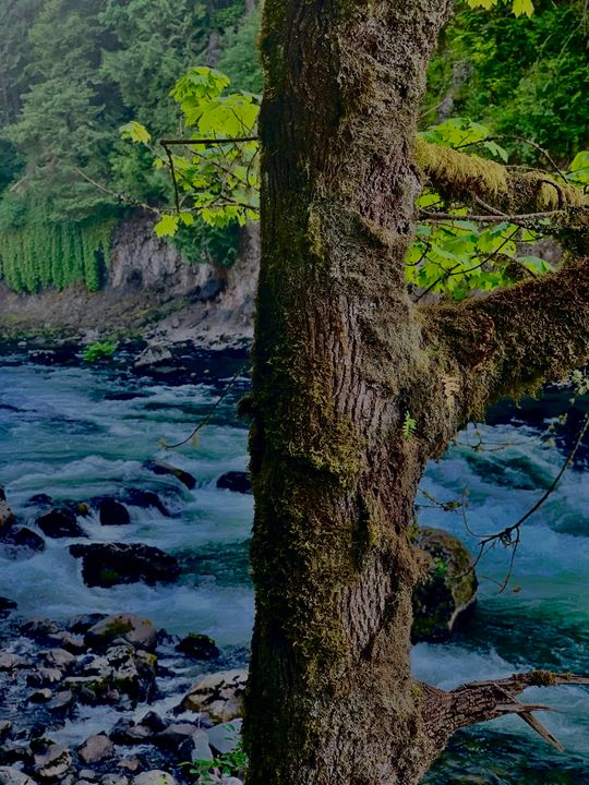 Snoqualmie Falls River - The Beauty that Surrounds Us