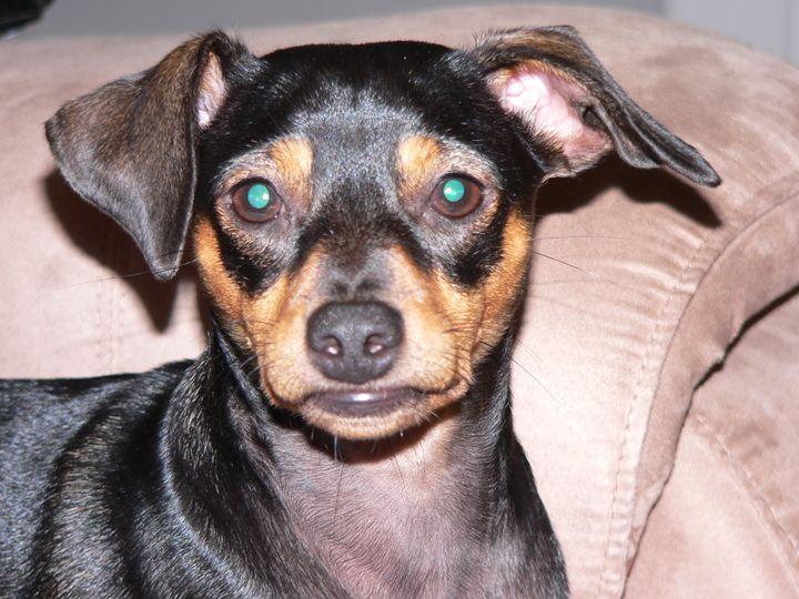 Dog Expression - Howard's Photography LLC
