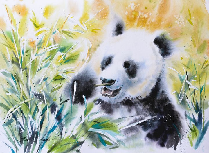 Giant panda - Eve Mazur