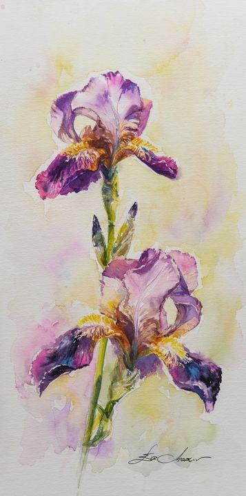 Iris - Eve Mazur