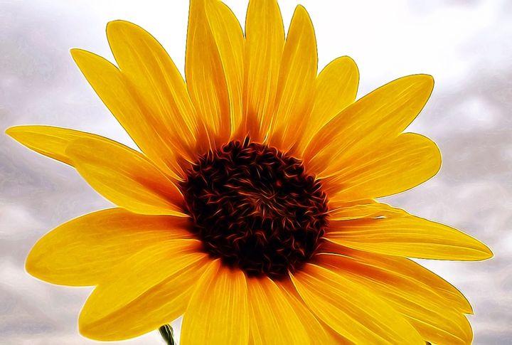 Sunflower - Captured Moments