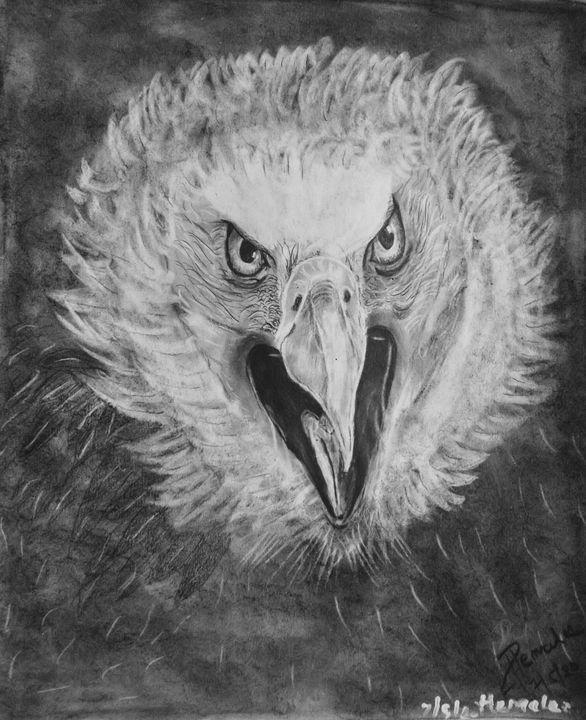 Angry bald eagle - Hems
