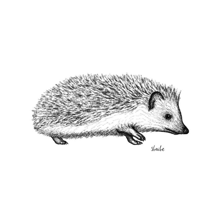 Hedgehog - sbaibe