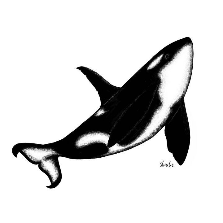 Whale - sbaibe