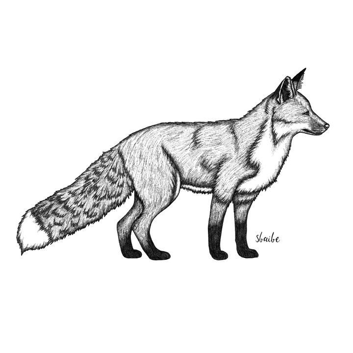 Fox - sbaibe