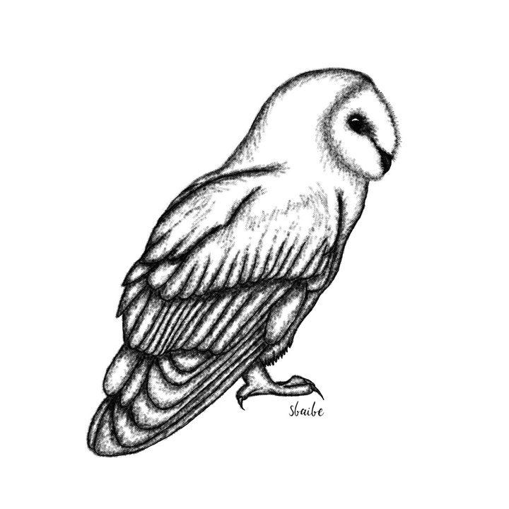 Owl - sbaibe