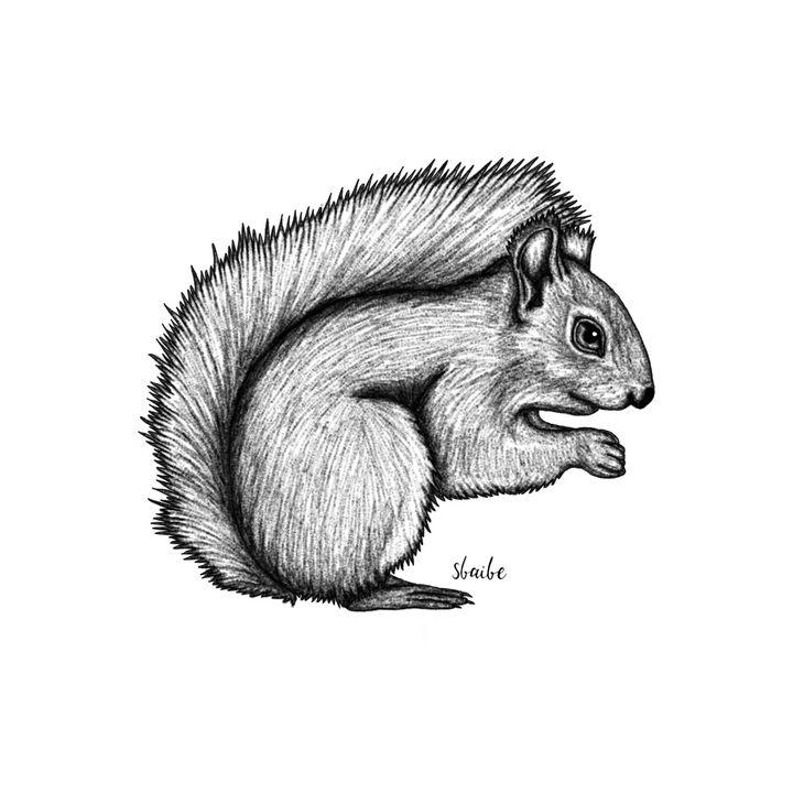 Squirrel - sbaibe