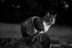 Macy on a log