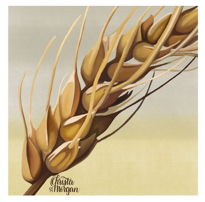 Wheat Stalk | Realistic Painting - Christa Morgan Design