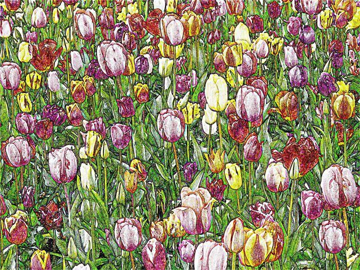 Tulip Garden Digital Image - Digital Sketches
