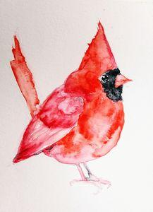 Red Christmas cardinal bird