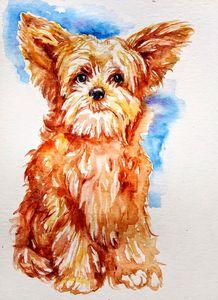 Puppy, dog