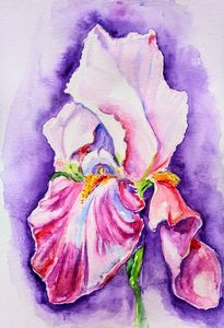 Pale pink purple iris flower