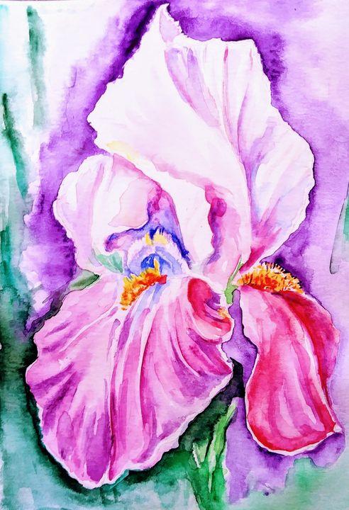 Iris flower - Daniela