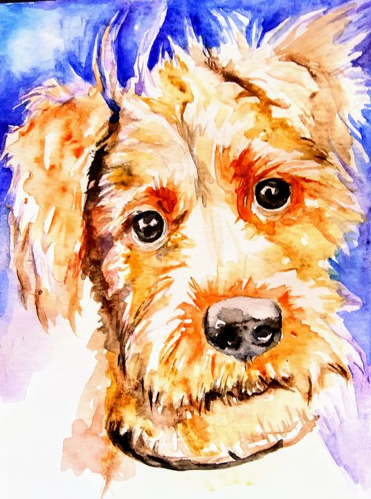 Irish terrier dog - Daniela