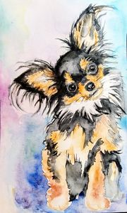 Chihuahua puppy dog portrait