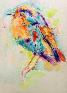 Colorful bird Christmas robin