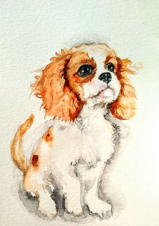 Spaniel puppy - Daniela