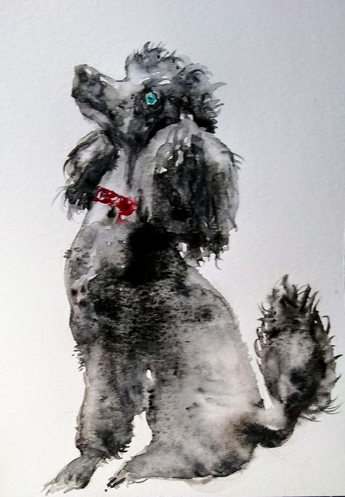 Black poodle dog - Daniela
