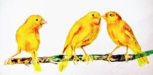 Yellow canary bird s