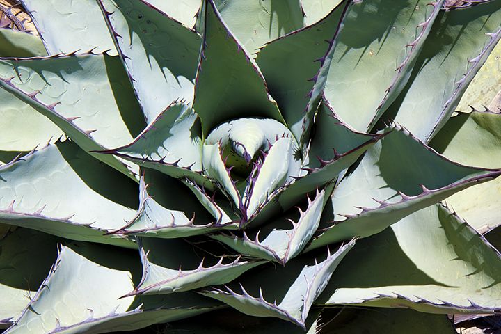 Cactus - Landscapes of the American West