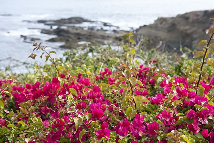 Pacific Flowers - Landscapes of the American West