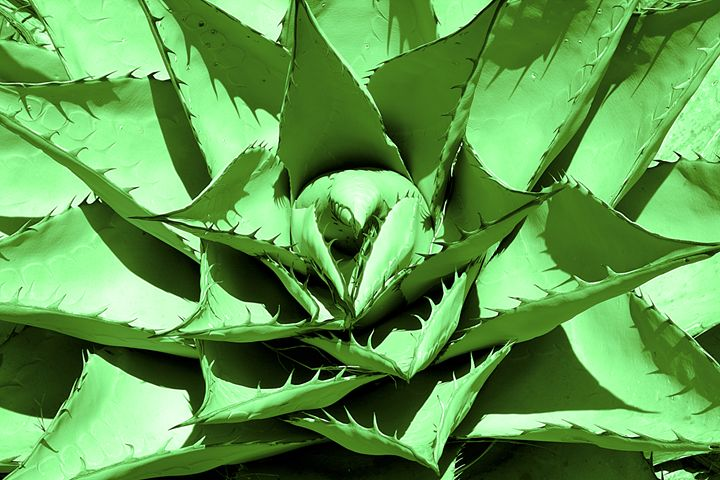 Green Cactus - Landscapes of the American West