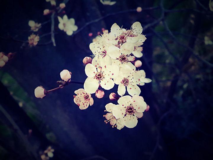 New blossom - Megz Creationz